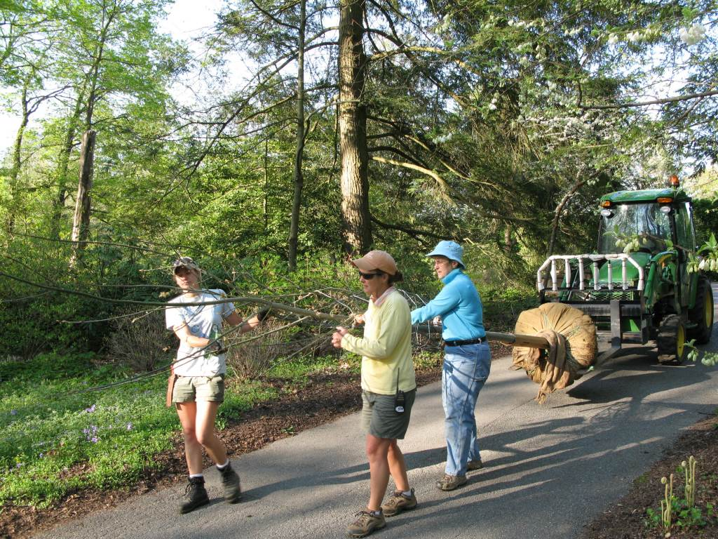 Escorting the Sentinel Oak with (from left to right) London, Naomi, Maureen and Bob (In the John Deere)