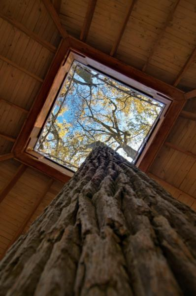 Tulip-tree in the Lookout Loft treehouse.