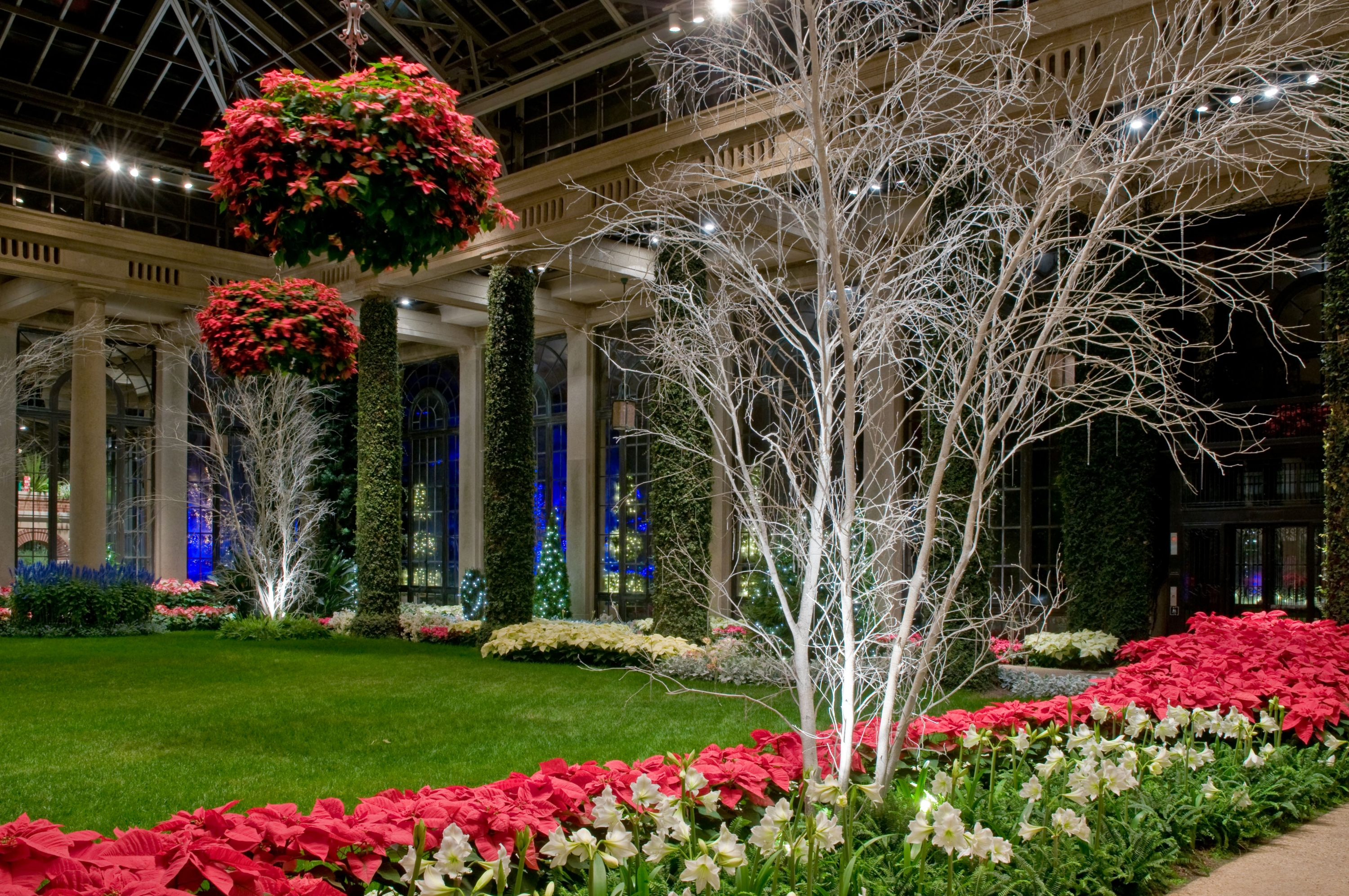 Poinsettia baskets on display in Longwood's Conservatory during Christmas