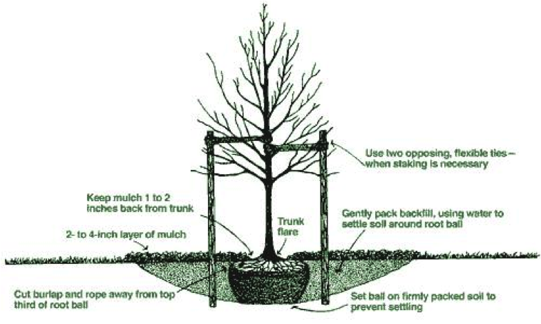 how to cut down a tree diagram